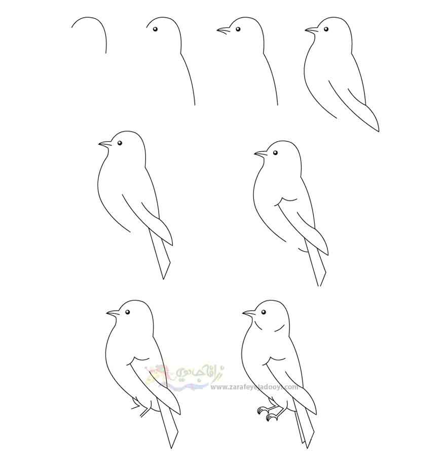 آموزش قدم به قدم نقاشی ساده پرنده