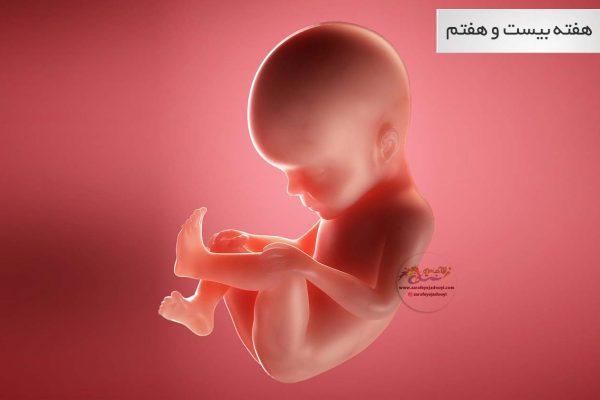 وضعیت جنین در هفته بیست و هفتم بارداری هفته به هفته