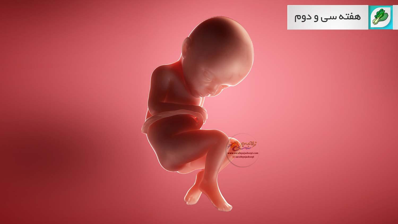 وضعیت جنین در هفته سی و دوم بارداری هفته به هفته