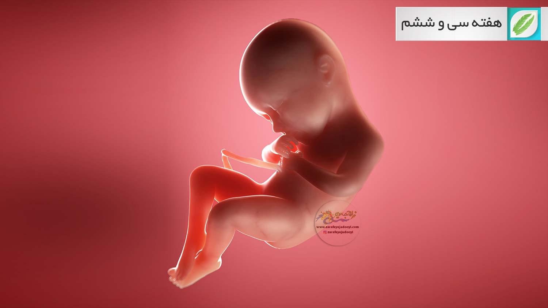 هفته سی و ششم بارداری - هفته ۳۶ بارداری