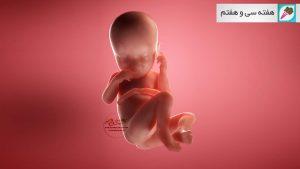 وضعیت جنین در هفته سی و هفتم بارداری هفته به هفته