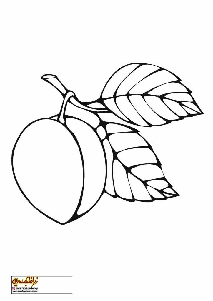 نقاشی میوه آلو برای رنگ آمیزی