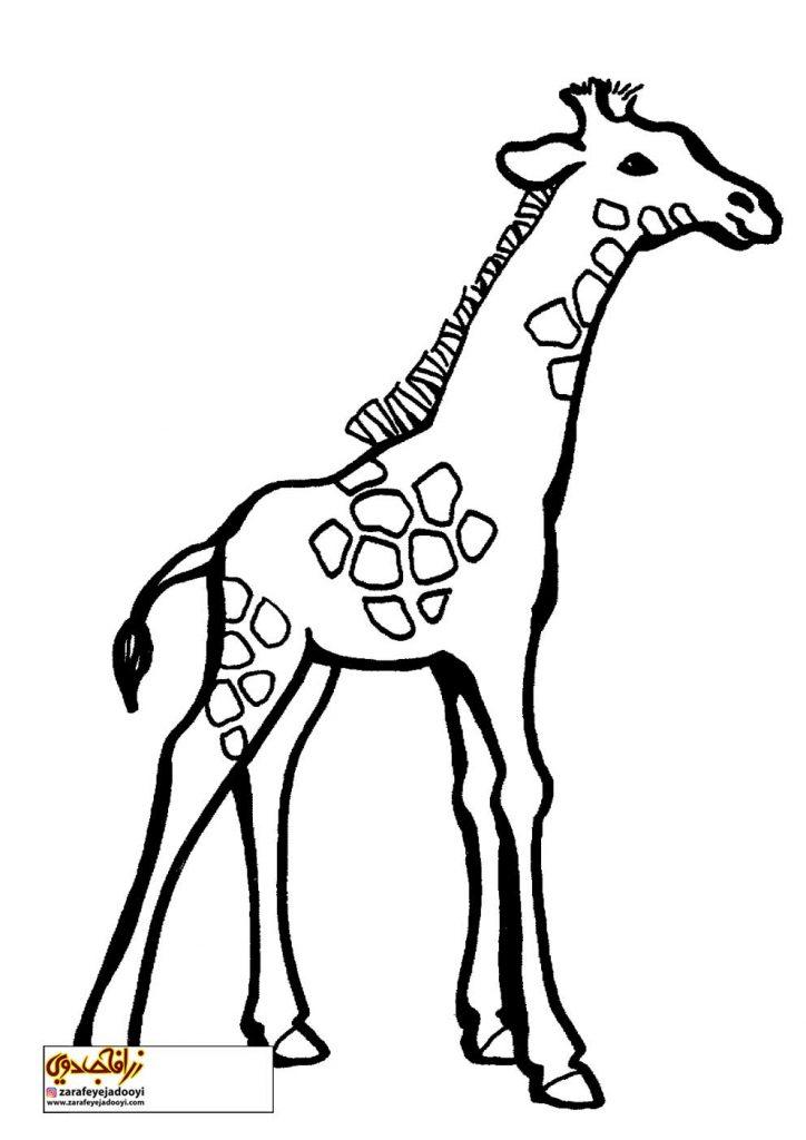 نقاشی ساده زرافه برای رنگ آمیزی کودکان - نقاشی زرافه برای کودکان 2