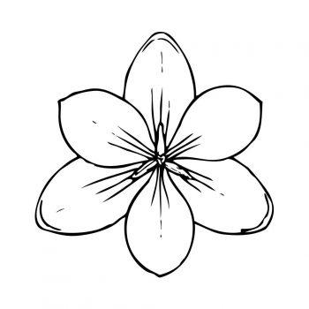 زرافه-جادویی-رنگ-آمیزی-کودکان-نقاشی-گل-11