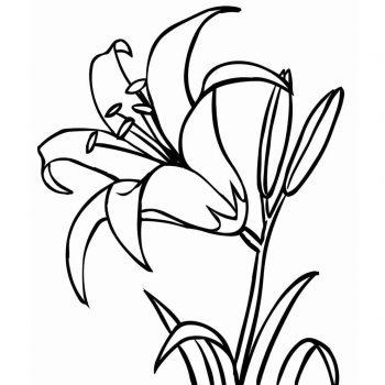 زرافه-جادویی-رنگ-آمیزی-کودکان-نقاشی-گل-14