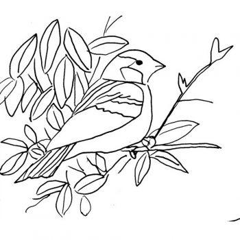 زرافه-جادویی-رنگ-آمیزی-کودکان-پرنده-09