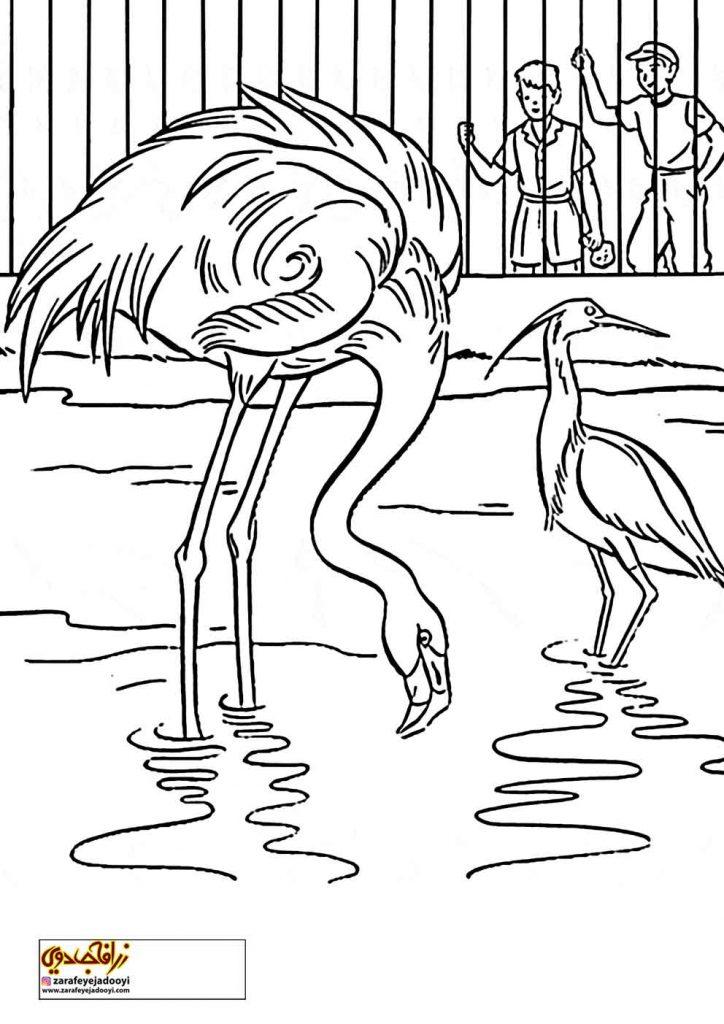 نقاشی باغ وحش پرندگان پرنده برای رنگ آمیزی
