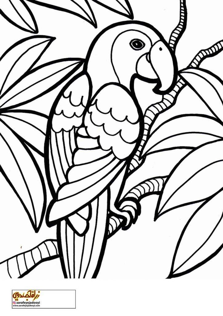 نقاشی طوطی و درخت برای رنگ آمیزی