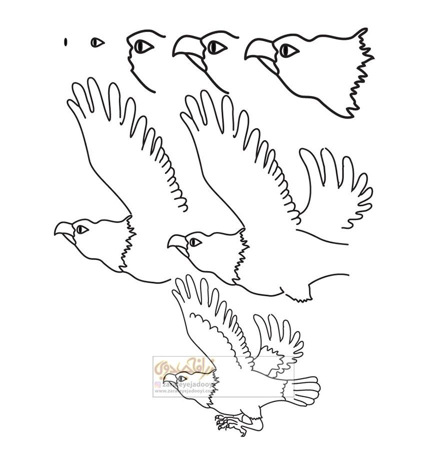 آموزش قدم به قدم نقاشی ساده عقاب